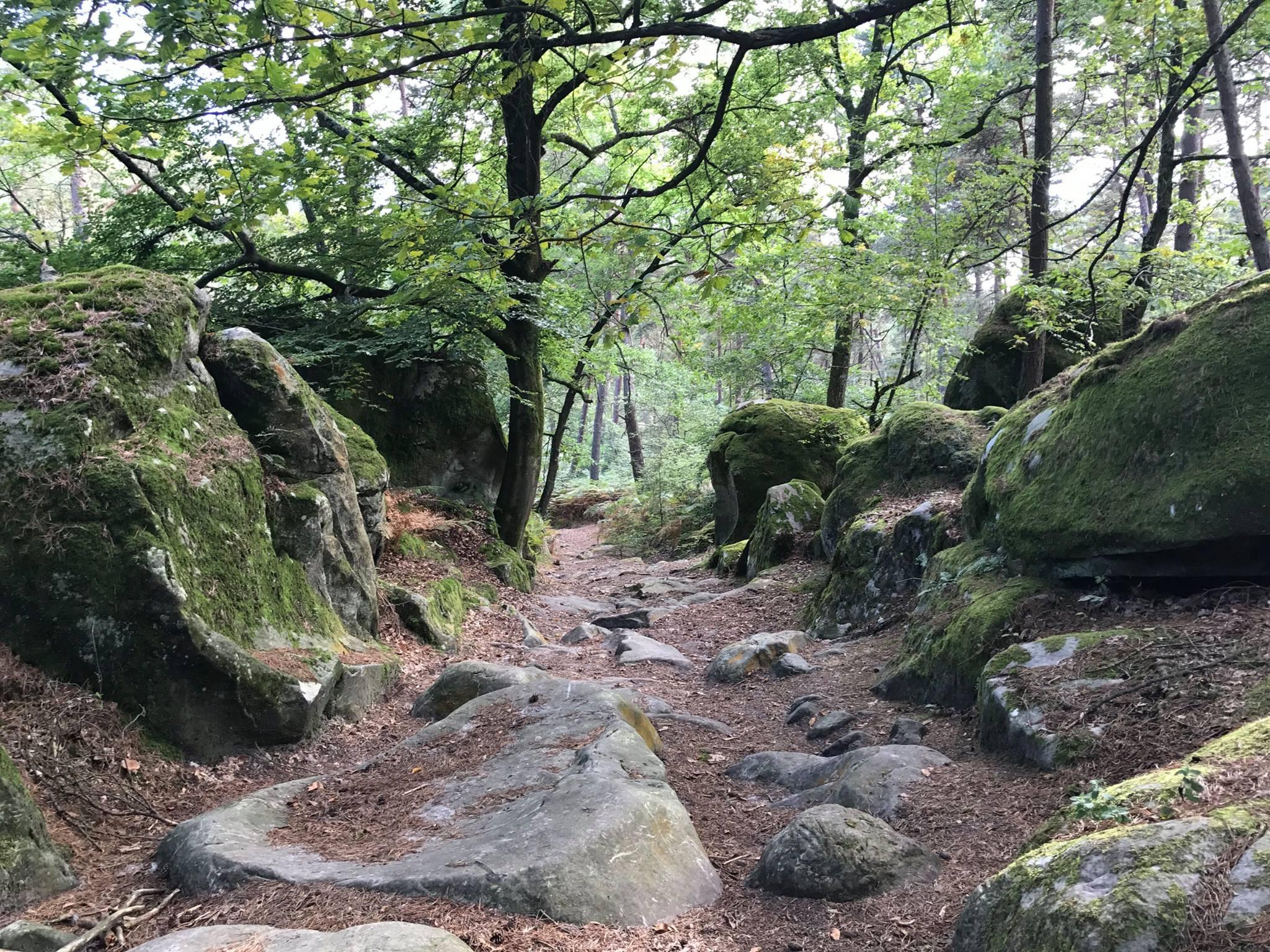 Randonnée en forêt de Fontainebleau, de Melun à Bois-le-Roi