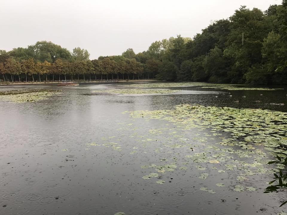 Forêt de la Malmaison - Bois de Saint-Cucufa