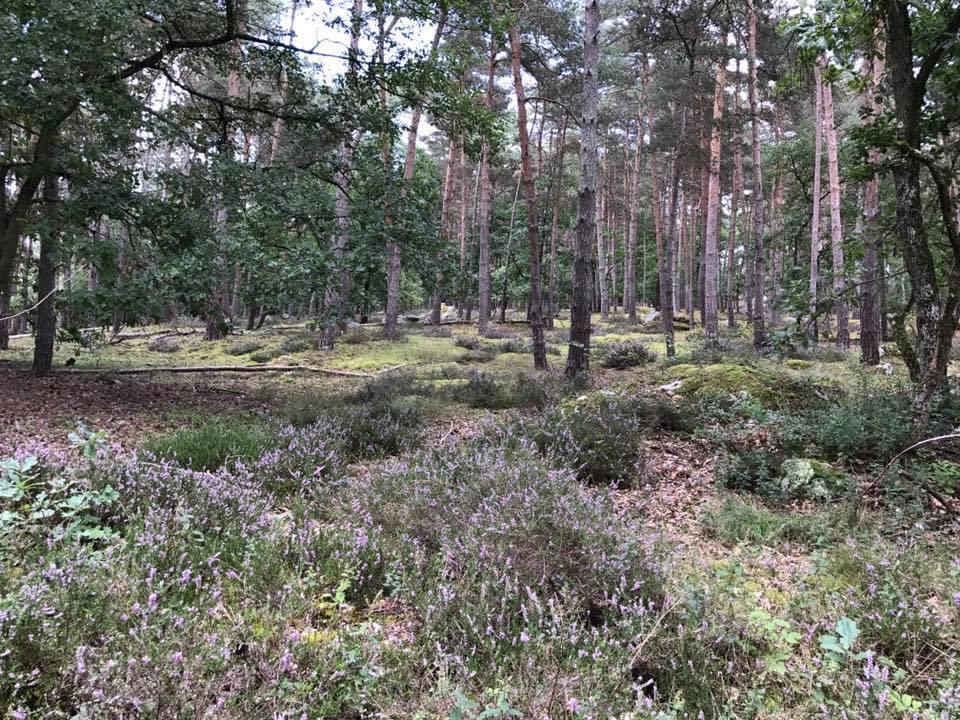 Randonnée GR1 – Etape 18 : Malesherbes à Boutigny-sur-Essonne